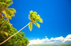Tropical beach with beautiful palms and white sand Stock Photography