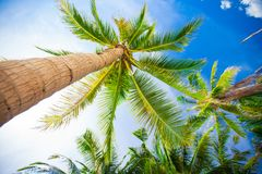 Tropical beach with beautiful palms and white sand Stock Images