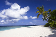 Tropical beach and big white cloud in the sky Royalty Free Stock Image