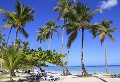Tropical beach with blue long chairs and grass on the foreground Stock Photo
