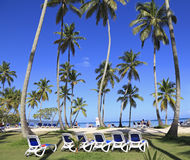 Tropical beach with blue long chairs and grass on the foreground Stock Images
