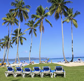 Tropical beach with blue long chairs and green grass Stock Image