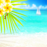 Tropical beach border Royalty Free Stock Photography