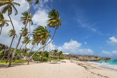 Tropical beach Bottom Bay on the caribbean island Barbados Royalty Free Stock Photo