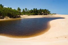 Tropical Beach in Brazil Royalty Free Stock Photography