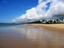 Tropical beach brazil  Royalty Free Stock Photos