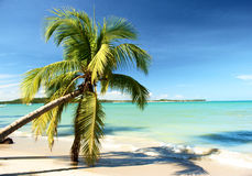 Tropical beach in Brazil Royalty Free Stock Photos