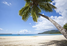 Tropical beach in the Caribbean Royalty Free Stock Image