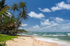 Tropical beach on the caribbean island Royalty Free Stock Photography