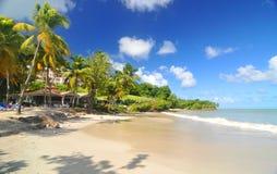 Tropical beach. In Caribbean paradise Stock Photos