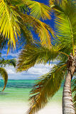 Tropical beach of caribbean sea Royalty Free Stock Image