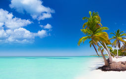 Tropical beach in Caribbean Sea Royalty Free Stock Images