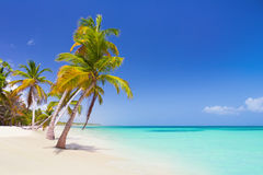 Tropical beach in Caribbean Sea Royalty Free Stock Photography
