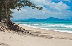 Tropical beach with Casuarina tree Royalty Free Stock Image
