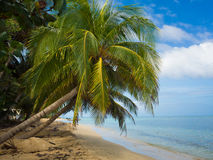 Tropical beach. With cocononuts palm on a caribbean island Stock Photo