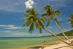 Tropical beach with coconut palm Stock Photos