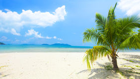Tropical beach with coconut palm Stock Photography