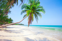 Tropical beach with coconut palm Royalty Free Stock Photos