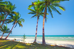 Tropical beach with coconut palm Stock Images