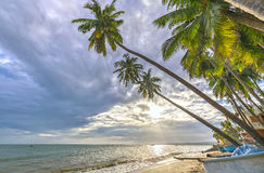 Tropical beach with coconut palm. This is the appropriate place for weekend vacation with family Stock Photography