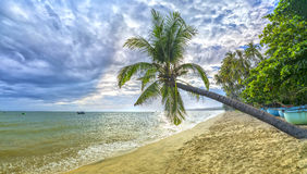 Tropical beach with coconut palm. This is the appropriate place for weekend vacation with family Royalty Free Stock Photos