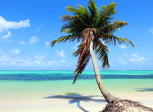 Tropical beach with coconut palm Stock Image
