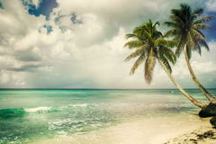 Tropical beach with coconut palm Royalty Free Stock Photo