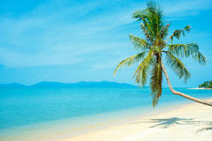 Tropical beach with coconut palm. Koh Samui, Thailand Royalty Free Stock Images
