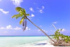 Tropical beach coconut palm Royalty Free Stock Photo