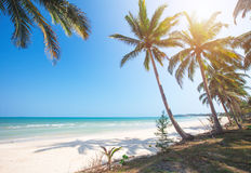 Tropical beach and coconut palm trees Stock Images