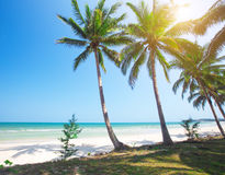Tropical beach and coconut palm trees Stock Image