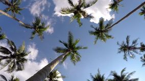 Tropical Beach with Coconut Palm Trees against. Blue Sky. Timelapse. HD, 1920x1080 stock video footage