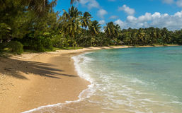 Tropical beach with coconut palm trees Royalty Free Stock Photography