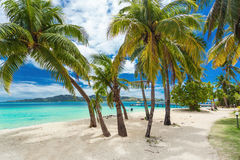 Tropical beach with coconut palm trees and lagoon on Fiji Island. Tropical beach with coconut palm trees and vibrant lagoon on Fiji Islands Royalty Free Stock Photo
