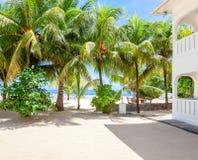 Tropical beach with Coconut palm trees, Mahe, Seychelles Royalty Free Stock Photos