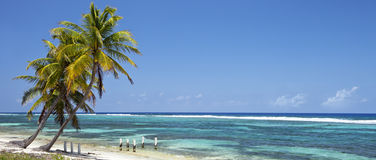 Tropical beach with coconut palm trees -panorama Stock Image