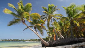 Tropical beach with coconut palm and white sand. Dominican Republic stock video footage
