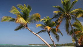 Tropical beach with coconut palm and white sand. Dominican Republic stock footage