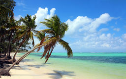 Dominican Republic, Punta Cana - Tropical beach with coconut palms Stock Photography