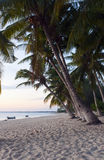 Tropical beach with coconut palms Stock Photos