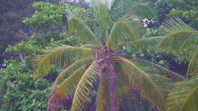 Tropical beach with coconut palms trees. Tropical beach with coconut palms trees stock video