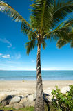 Tropical beach with Coconut tree. MS: Single coconut tree on foreshore with a wide white sandy beach to the blue sea under a blue sky. Sm detail - yellow kayak Royalty Free Stock Image