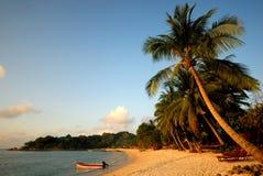 Tropical  beach Coconut Tree Natural Sea Concept Stock Photo