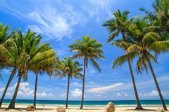 Tropical beach with coconut tree Stock Photos
