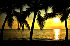 Tropical beach with coconut tree Royalty Free Stock Photography