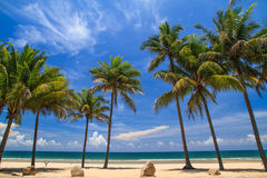 Tropical beach with coconut tree Stock Photography