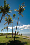 Tropical beach with Coconut trees. WS: A row of tall coconut trees on foreshore with a wide white sandy beach to the blue sea under a blue sky. Coastal pathway Stock Images
