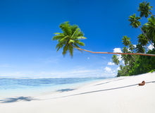 Tropical Beach and Coconut Trees Royalty Free Stock Images