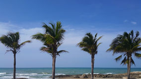 Tropical beach with coconut trees against blue sky. Royalty Free Stock Photo