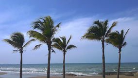 Tropical beach with coconut trees against blue sky. Stock Image